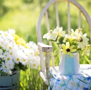 plantverkoop-aan-huis-part-plants-gratis-aanplanten
